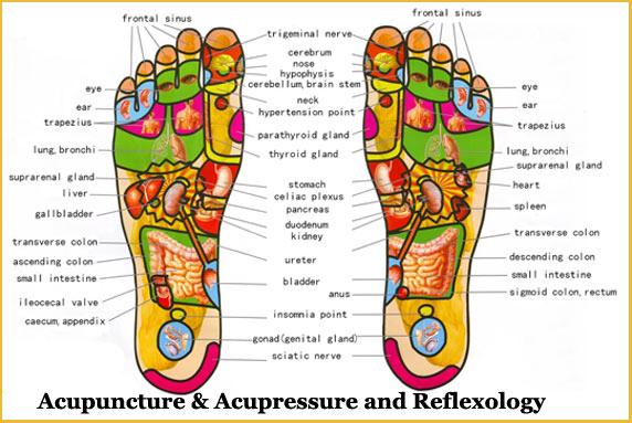 Acupuncture & Acupressure Reflexology