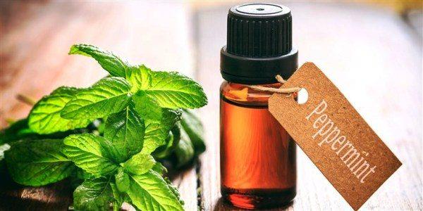 Apply Peppermint Oil